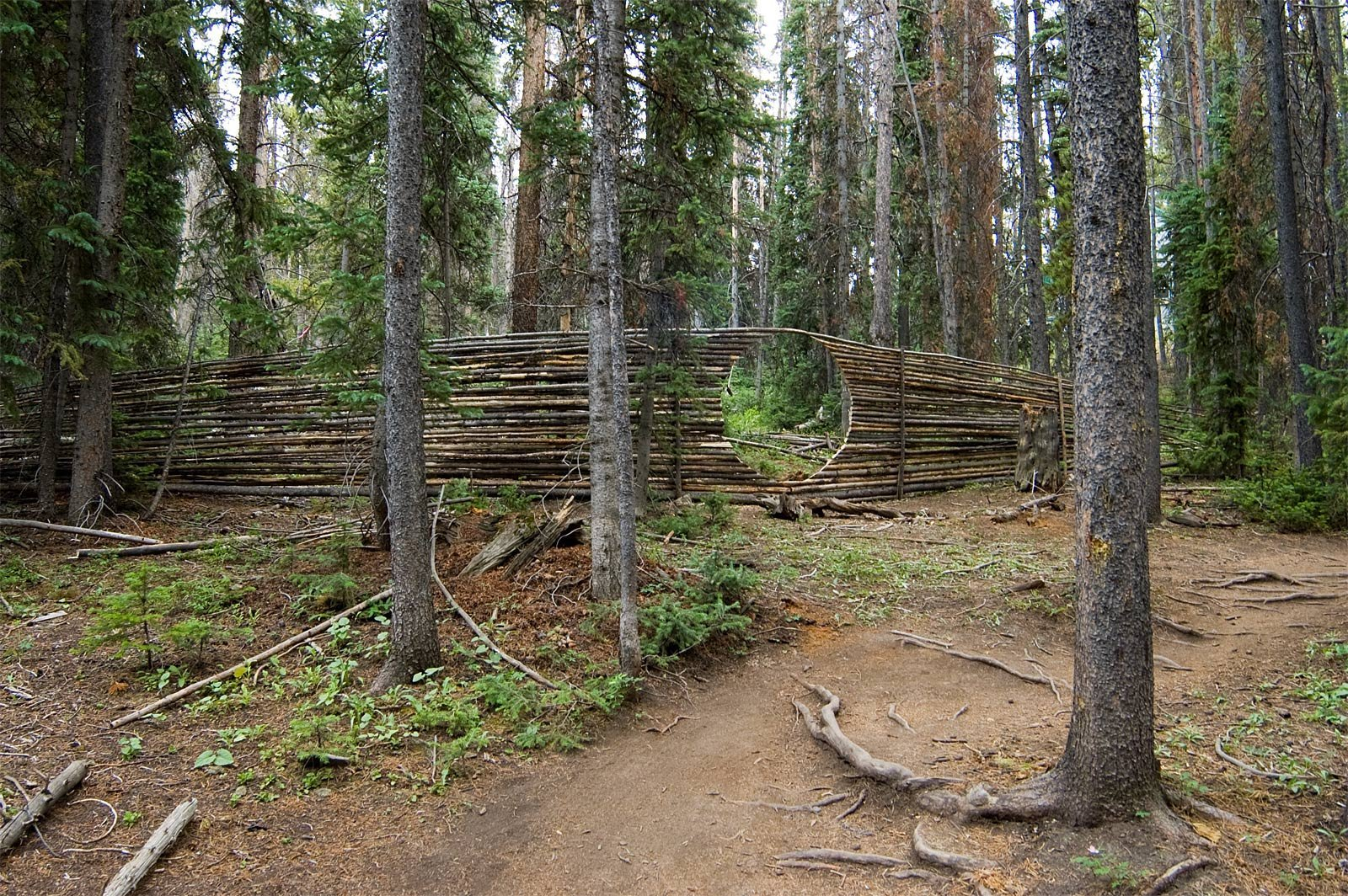 public artwork made from dead and down lodgepole pines